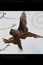 Michigan Birds - Great Horned Owl - Bird Photo by Ike Austin