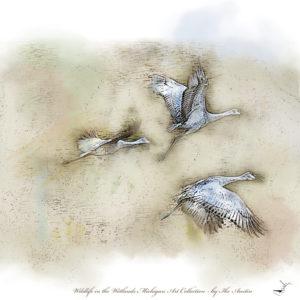 Michigan Art Prints SandHillCranes-Trio
