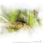 Nature Art Photography Bird Art Prints Michigan