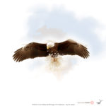 Nature Photography Artwork Michigan