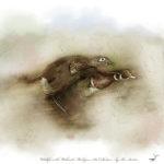 Wildlife in the Wetlands Wood Ducks
