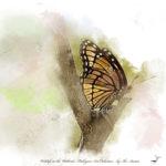 Monarch Butterfly Art Prints