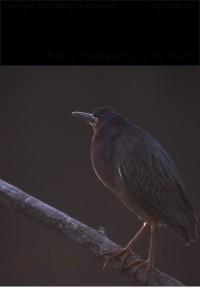 michigan-birds