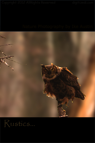 Birds Photography - Great Horned Owl - Photo by Ike Austin