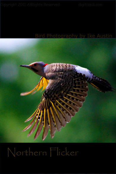 Michigan Flicker in Flight