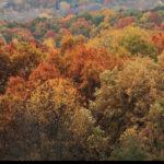 Autumn Leaves Colors