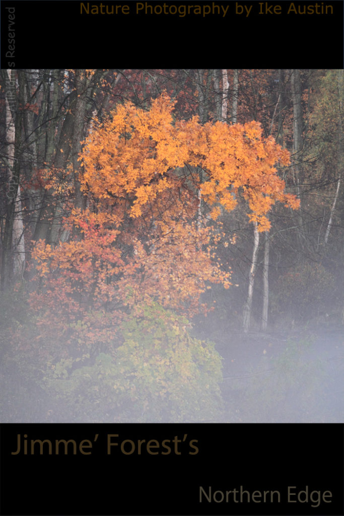 Michigan Fall Fog Colors - Photo by Ike Austin