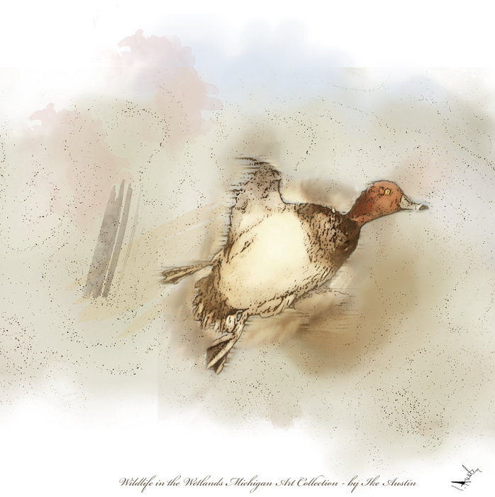 Michigan Art Prints Redhead Winter Duck by Ike Austin